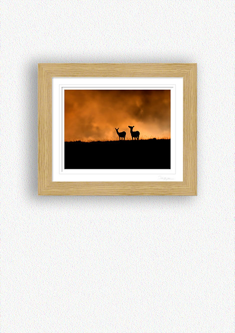 Deer Silhouettes Fine Art Print Mounted in Oak Frame