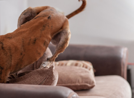 Ways to exercise your dog if you are stuck indoors!