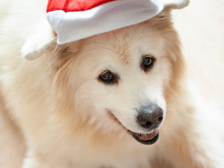 10 Christmas gift ideas your dog will LOVE!