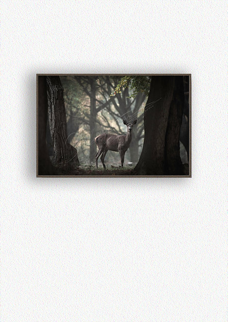 Hind Fine Art Print Mounted in Box Frame