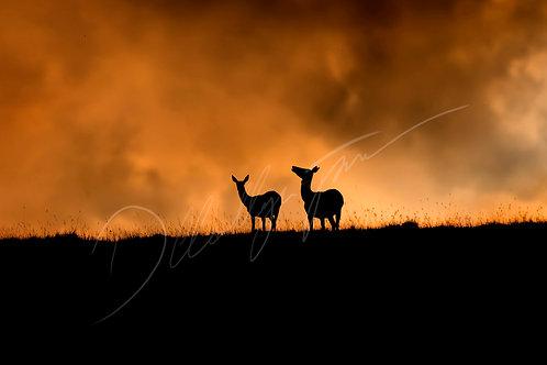 Deer Silhouettes Fine Art Print