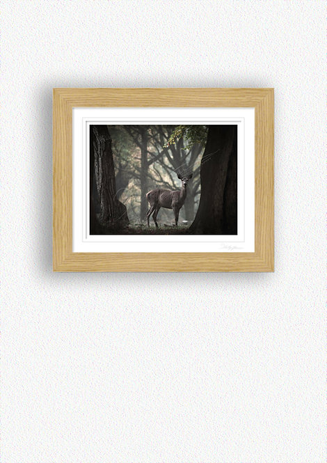 Hind Fine Art Print Mounted in Oak Frame