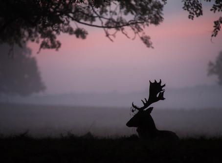 It's too early Deer.