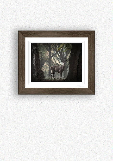 Hind Fine Art Print Mounted in Brushed Bronze Frame