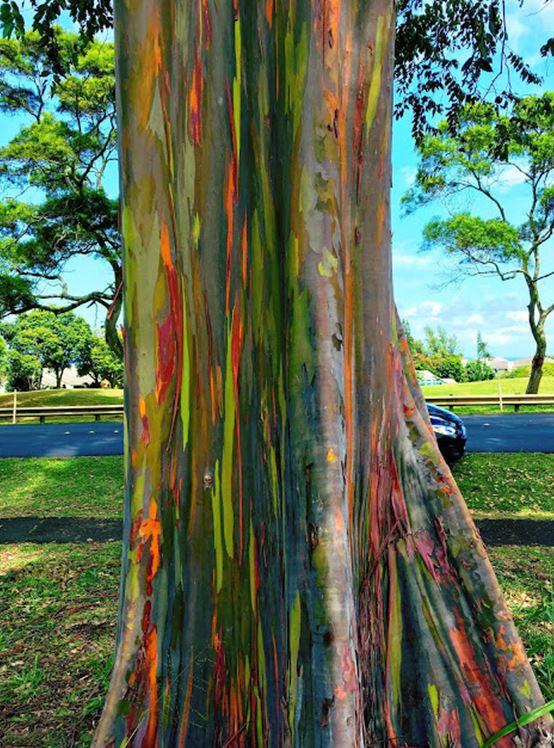 Vaiva Rykstaite, Pirmakart mama, knyga, supermama, Havajai, rasytoja, keliauju su vaikais, ekologija, emigrante, kauai, gaidziu rojus, banglenciu rojus, rainbow eucalyptus