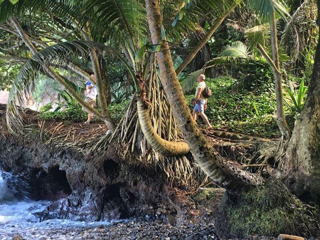 Vaiva Rykstaite, Pirmakart mama, knyga, supermama, Havajai, rasytoja, keliauju su vaikais, ekologija, emigrante