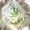Thumbnail: Clear Canna Soap