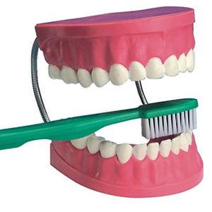 Health - Teeth