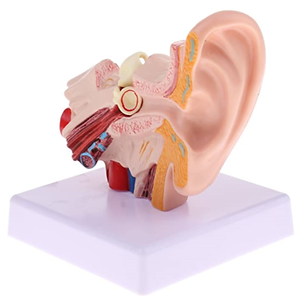 Health - Ear