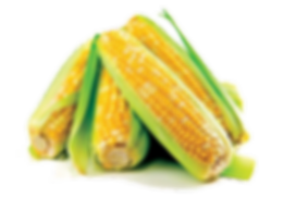 corn,cerials,boulias,animal,feed,market,trade,wholesale,northern greece
