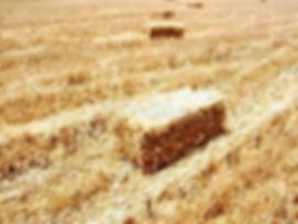 Δέματα Άχυρου Κριθαριού μπούλιας ζωοτροφές, εμπορία, χονδρική, δημητριακά