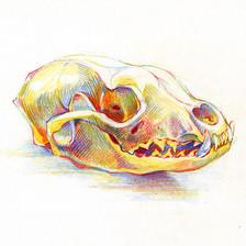 Chromatic Skull