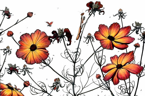 Cosmos | Matted Print