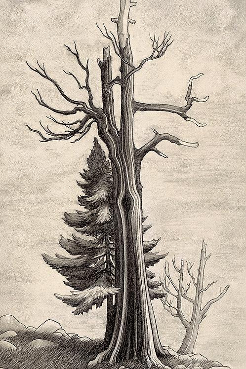 Bristlecone Pine | Matted Giclee Print
