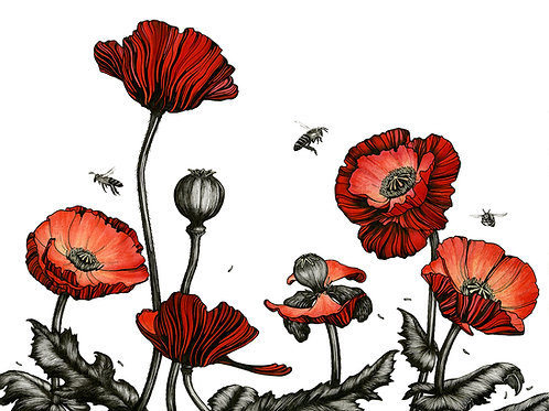 Poppies | Original Drawing