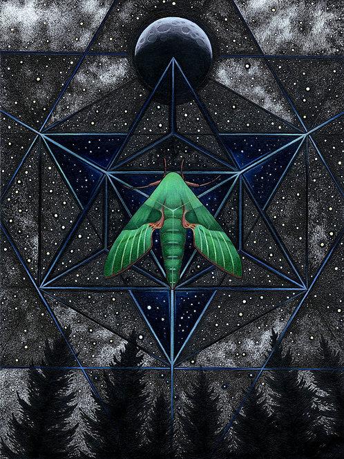 Sphinx Moth | Metal Print