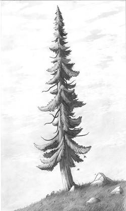 Grandfather Cedar