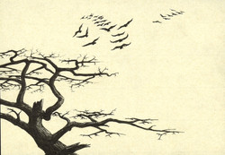 Cypress with Ravens