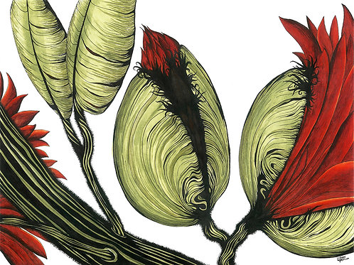 Awakening Buds | Matted Print