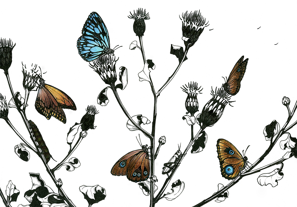 Butterflies with Thistle