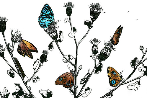 Butterflies with Thistle | Matted Print