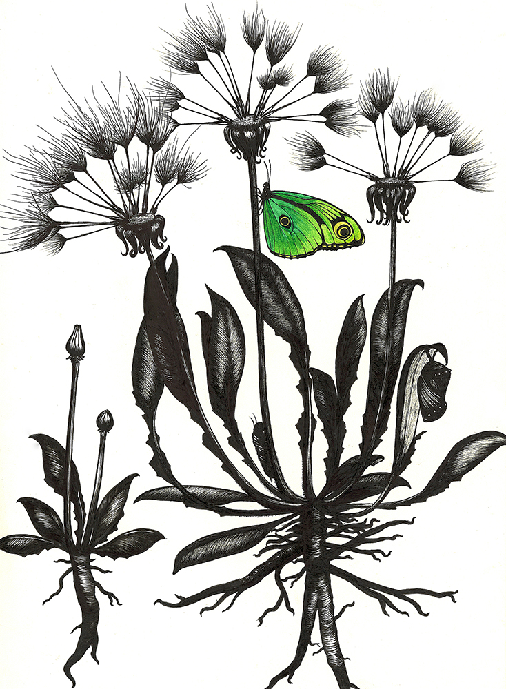 Green Butterfly with Dandelions