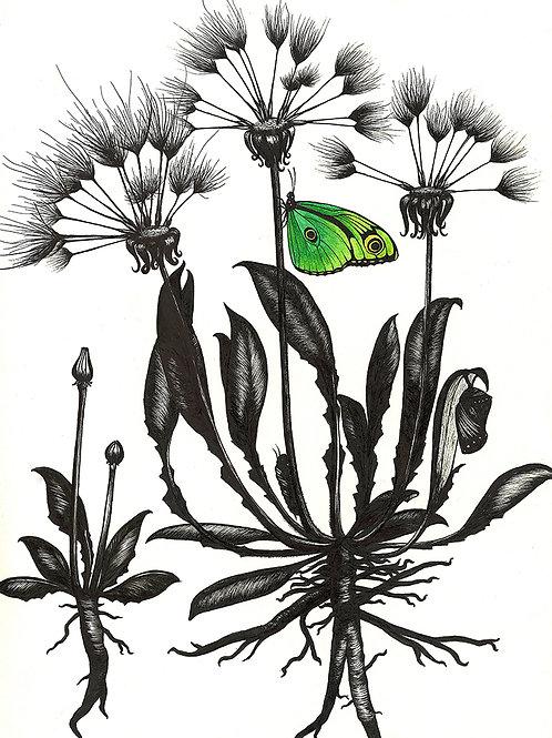 Green Butterfly with Dandelion | Framed + Enhanced