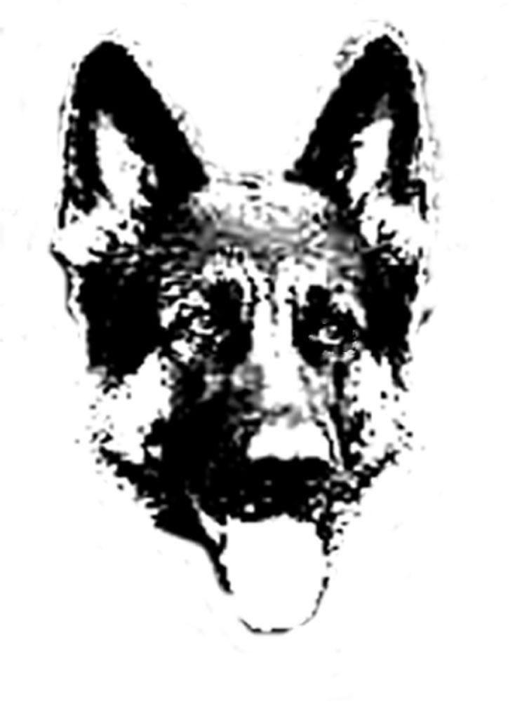 dogfaceweb.jpg