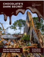 Chocolate's Dark Secrets