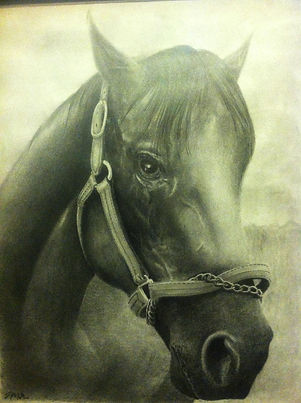 Custom artwork, custom art, favorite animals, pets, mans best friend, personalized art prints, art prints, fine art, custom drawings, drawing of dogs