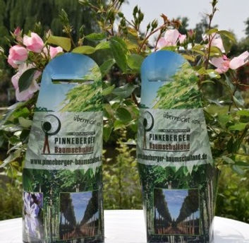 DSC_0169_Souvenirpflanze.jpg