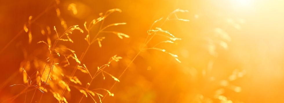 Close-up of Autumn Field Grass - 9982754