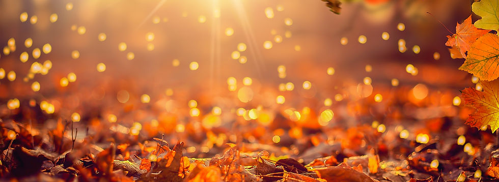 Close-up of Falling Autumn Leaves #2 - 1