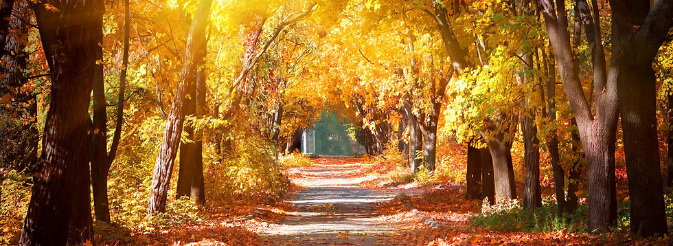 Path in Autumn Park - 521711391.jpg