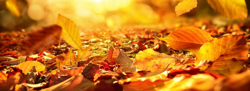 Close-up of Falling Autumn Leaves #1 - 5