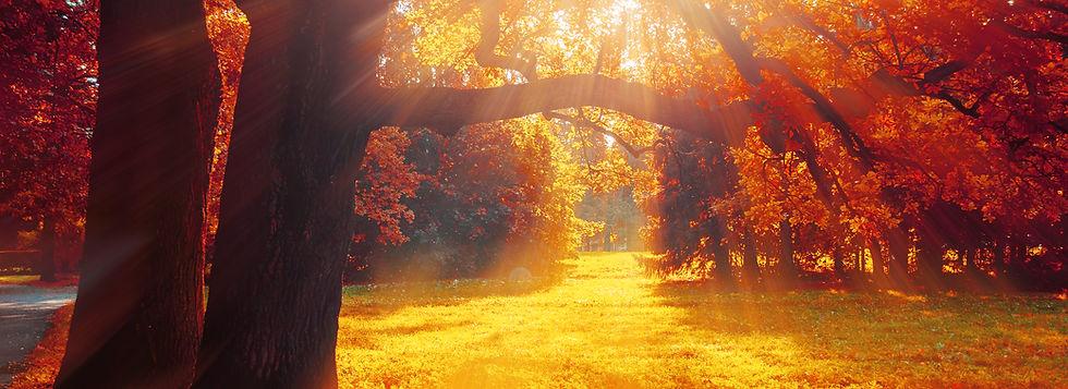 Autumn Trees in Sunny Park - 1026141830.
