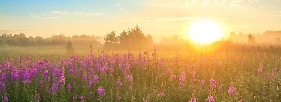 Meadow with Purple Flowers -480872808.jp