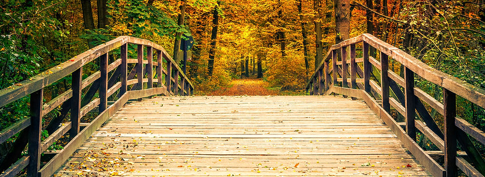 Wooden Bridge in Autumn Forest - 6074658