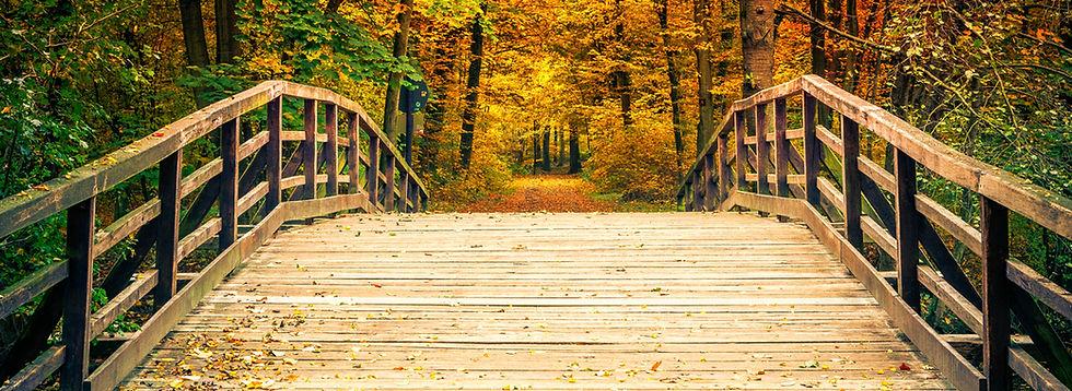 Wooden Bridge in Autumn Forest - 6074658
