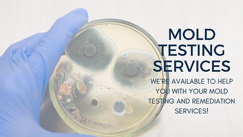 mold testing result