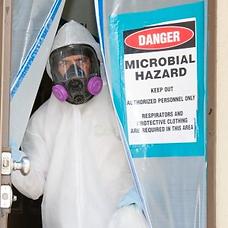 mold hazard profetional comapany