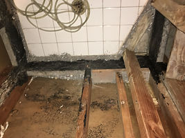 mold removal in the shower