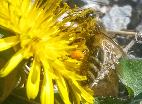 How can you help the pollinators?