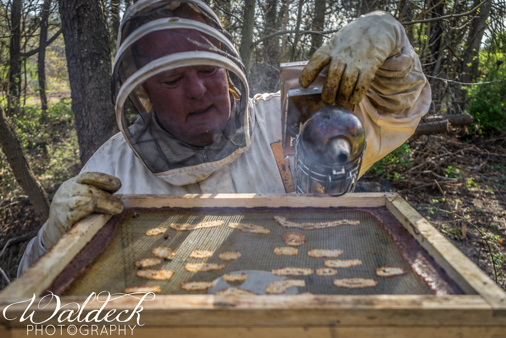 Jim smoking the top screen to keep the bees settled_