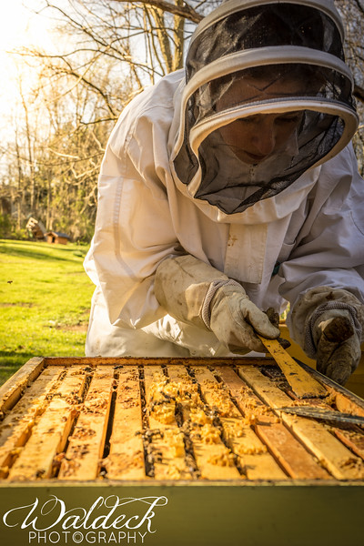 We use a hive tool (which looks a lot like a tiny crowbar) to clean and maintenance the hive_