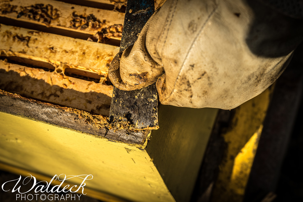 The bees put propolis (it's like hardened tree sap) on any nook or cranny that could make a draft_