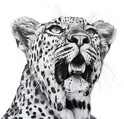 Wildlife Art Gallery Logo