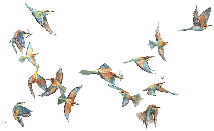 European Bee Eaters Watercolour LR.jpg