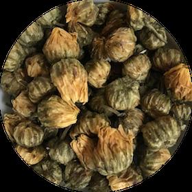 Chrysanthemum Buds