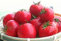 がんを予防する野菜 健康寿命